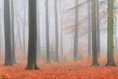 Orange Fußwegenwald Stockbild