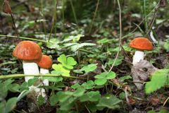 Orange fungus growing Stock Photos