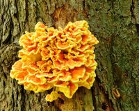 Orange Fungus Stock Photos
