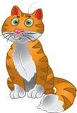 Orange funny sitting cat stock photos