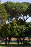 Orange Garden in Rome stock images