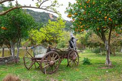 Orange garden with fruits. Orange garden with ts in Greece Royalty Free Stock Photography
