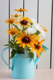 Orange gardens daisies, rudbeckia, flower in the blue watering can royalty free stock image