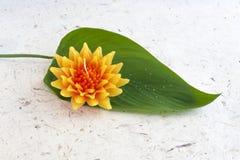 Orange Gazania flower Royalty Free Stock Images
