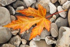 Orange gefallenes Blatt auf Steinen Stockfoto