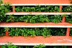 Orange gemalte hölzerne Treppe mit Anlagen Stockbilder