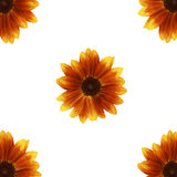 Orange gerber Stockbild
