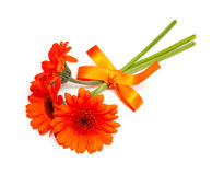 Orange gerber flower Stock Image
