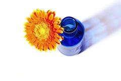 Orange gerbera in blue vase on white background Royalty Free Stock Images