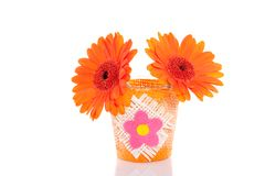Orange gerbera daisies Stock Photography