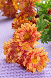 Orange gerbera daisies Stock Images