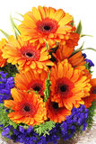 Orange Gerbera Daisies Royalty Free Stock Image