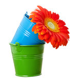 Orange gerbera daisy flower and multicolor buckets Royalty Free Stock Photography