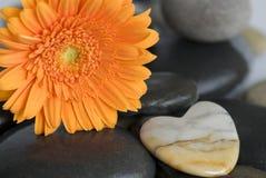 Orange Gerbera flower Royalty Free Stock Photography