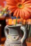 Orange gerbera flower in a blue vase stock photography