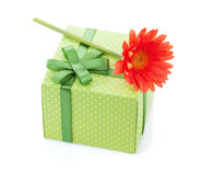 Orange gerbera flower over gift box Royalty Free Stock Image