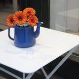 Orange gerbera flower Royalty Free Stock Images
