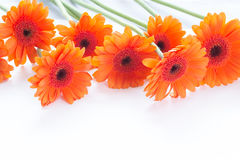 Orange gerbera flowers arrangement Royalty Free Stock Images
