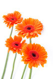Orange gerbera flowers arrangement Royalty Free Stock Photos