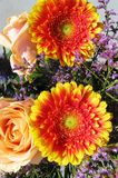 Orange gerbera flowers in a flower arrangement Royalty Free Stock Images
