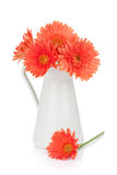 Orange gerbera flowers in pitcher. Isolated on white background stock image