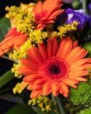 Orange Gerbera i en bukett royaltyfria foton