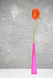 Orange gerbera in violet vase Royalty Free Stock Photos