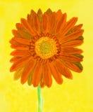 Orange gerbera on yellow, watercolor Royalty Free Stock Photography