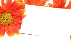 Orange Gerberablume mit leerer Karte Stockbild