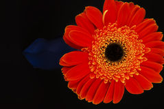 Orange gerberas-bottle Royalty Free Stock Photos