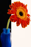 Orange gerberas-bottle Stock Photos