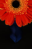 Orange gerberas-bottle Royalty Free Stock Photo