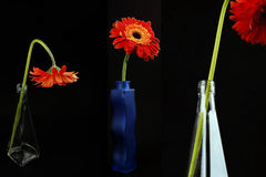 Orange gerberas-bottle Stock Images