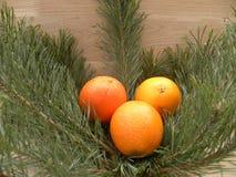 Orange gesetzte an Tannenzweige Lizenzfreie Stockbilder