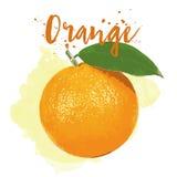 Orange gezeichnet in Aquarell Vektor ENV 10 Lizenzfreie Stockfotografie