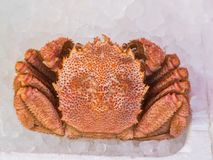 Orange Giant Crab on Ice. The Orange Giant Crab on Ice in The Fish Shop Royalty Free Stock Photography