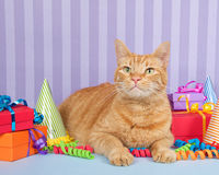 Orange ginger tabby cat sitting with birthday presents. Orange ginger tabby cat on light blue surface with purple stripped background piles of presents, party Stock Photo
