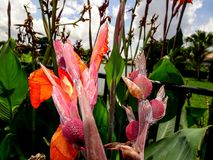orange Gladioleblumen nach einem leichten Regen Stockfotos