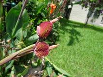 orange Gladioleblumen nach einem leichten Regen Lizenzfreie Stockfotos