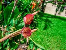 orange Gladioleblumen nach einem leichten Regen Lizenzfreie Stockbilder