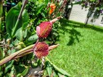 orange Gladioleblumen nach einem leichten Regen Lizenzfreie Stockfotografie