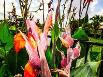 orange Gladioleblumen nach einem leichten Regen Lizenzfreies Stockfoto