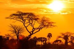 Orange glöd av en afrikansk solnedgång Fotografering för Bildbyråer
