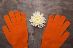 Orange gloves for the gardener Royalty Free Stock Images