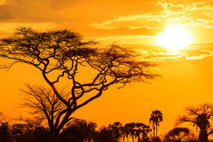 Orange glow of an african sunset. With tree in front Royalty Free Stock Image