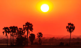 Orange glow sunset in a African landscape Stock Photos