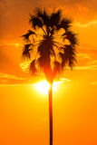 Orange glow sunset with a palm tree silhouette Royalty Free Stock Photos