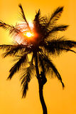 Orange glow sunset with a palm tree silhouette Stock Photos