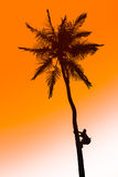 Orange glow sunset with a palm tree silhouette Royalty Free Stock Photo