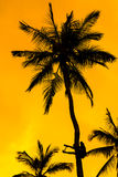 Orange glow sunset with a palm tree silhouette Stock Photo